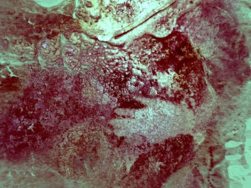 Les Néandertaliens, créateurs des plus anciennes fresques rupestres (étude)