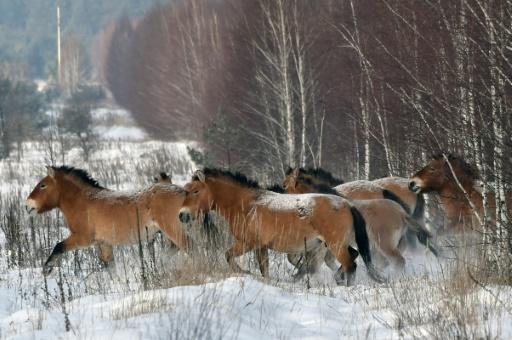 Il n'existe plus de chevaux sauvages sur Terre (étude)