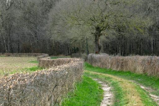 La Chine, acheteuse vorace de terres agricoles à l'étranger