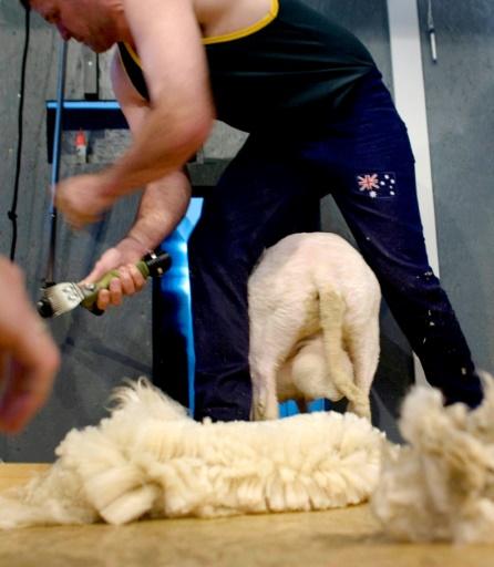 Australie: l'industrie de la laine renaît grâce à la Chine