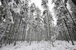 Météo - La neige fait son entrée