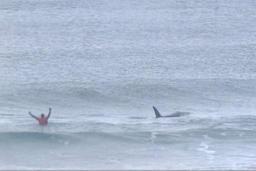 La Norvège relève les quotas pour relancer la chasse à la baleine