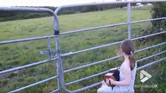 Cette petite fille joue de l'accordéon face à un champ, et là, quelques chose d'adorable se produit (vidéo)