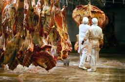 Veviba - Le traçage des queues de vaches et de la viande hachée Veviba terminé