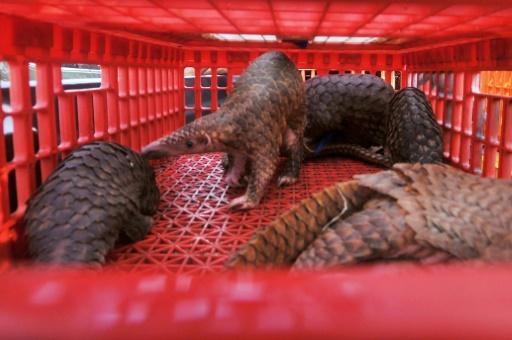 Indonésie: la high tech pour lutter contre les trafics d'animaux