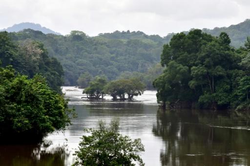 Bois tropicaux: Rougier en procédure de sauvegarde