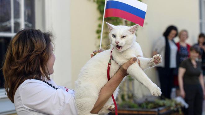 Voici Achille, le pronostiqueur officiel de la Coupe du monde en Russie
