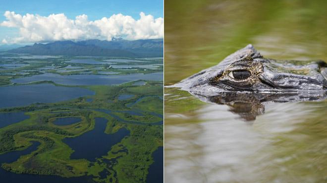 Le Pantanal est la plus grande zone humide de la planète: c'est une incroyable biosphère (PHOTOS)