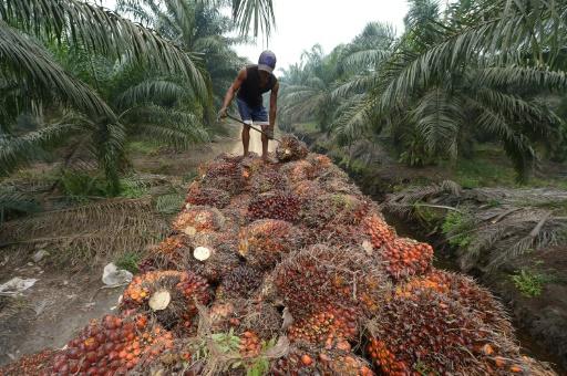 Indonésie: des multinationales refusent de révéler la provenance de leur huile de palme