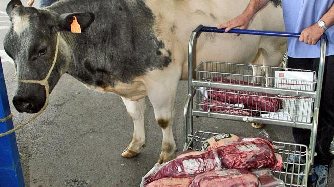 Test à l'aveugle: le blanc-bleu-belge bien meilleur en goût que les fameux bœufs argentins ou irlandais