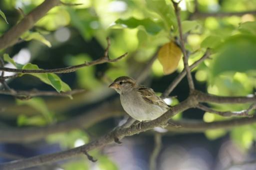Les oiseaux des campagnes en déclin