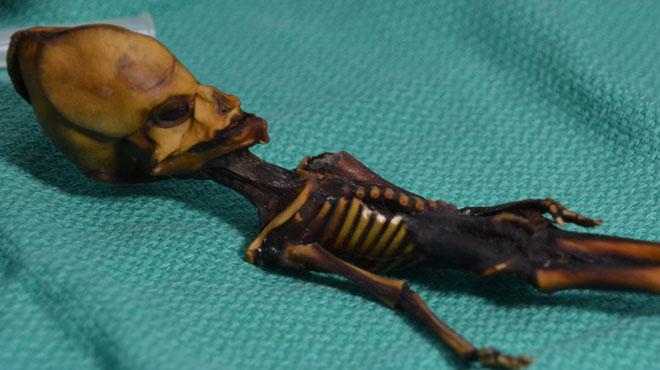 Longtemps considéré comme un extraterrestre, le mystère de ce squelette retrouvé au Chili enfin résolu
