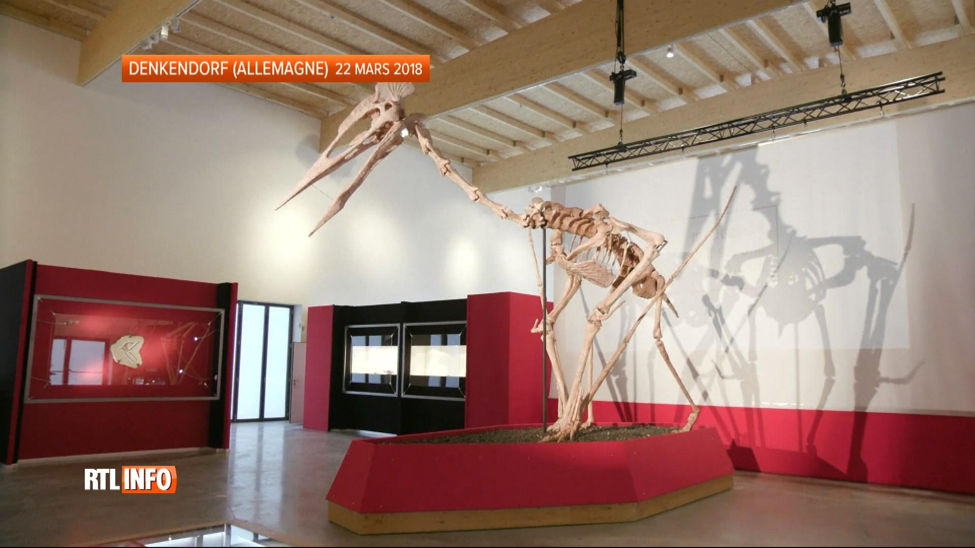 Il a des ailes aussi grandes qu'un planeur : ils ont découvert le plus grand squelette de ptérosaure !