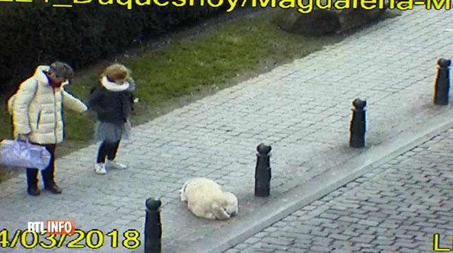 Un chien mal en point sauvé grâce aux caméras de surveillance de la police de Bruxelles