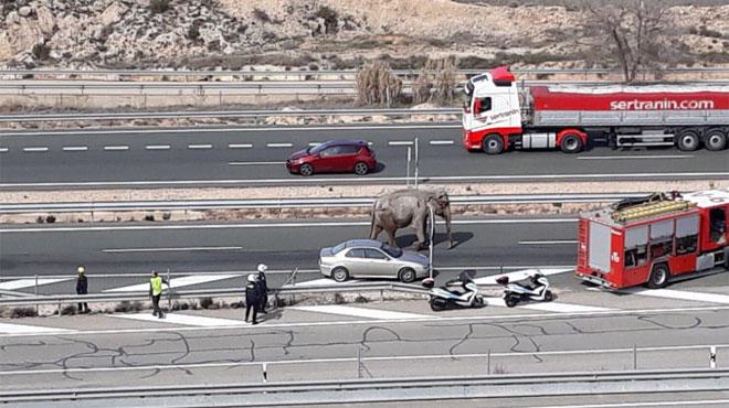 Un camion transportant des éléphants se renverse en Espagne: l'un d'eux est mort et a dû être évacué avec une grue