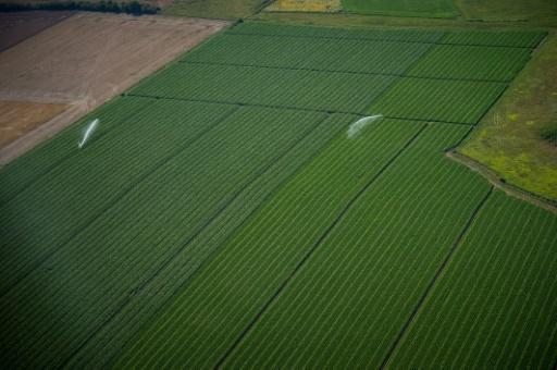 Agriculture: l'ONU se convertit à l'agroécologie