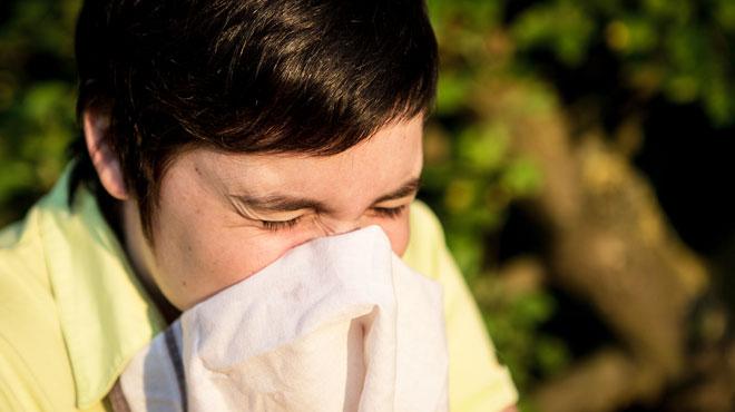 Attention, le pollen de Bouleau, l'arbre le plus allergisant de Belgique, est bien présent dans l'air: comment s'en protéger?