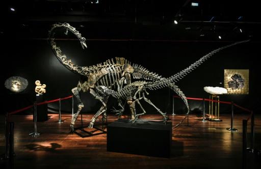 Qui veut un dinosaure ? Deux ventes aux enchères leur sont consacrées à Paris
