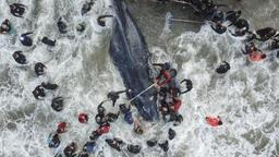 Une baleine échouée meurt sur une plage argentine malgré les efforts de la population