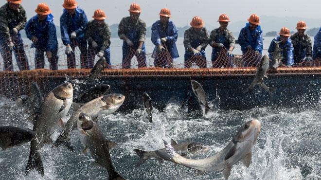 Les pêcheurs du lac des Mille-îles en Chine sont-ils les derniers?