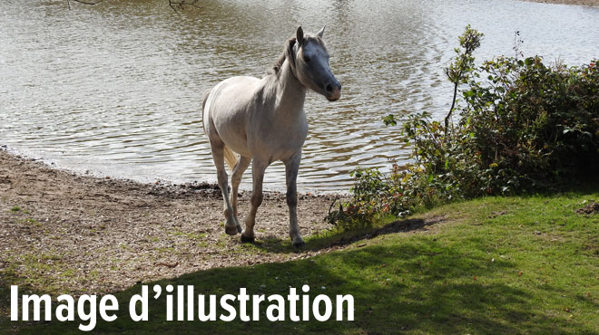 Baulers: les pompiers sauvent un cheval tombé dans un étang