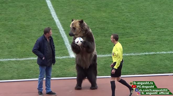 Russie : quand un ours bien vivant donne le ballon à l'arbitre