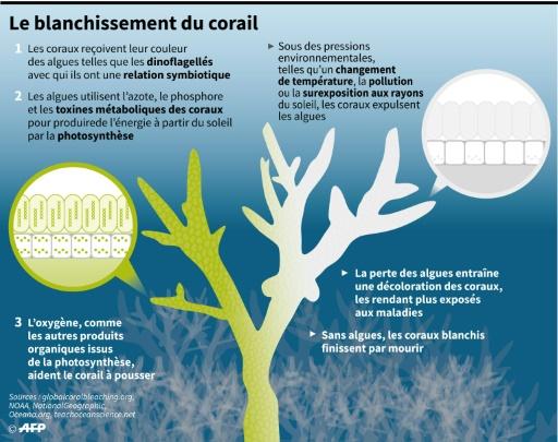 Un refroidissement de l'eau détruit des coraux au large du Japon