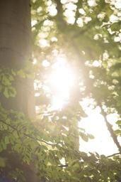 Le soleil et la chaleur ne nous quitteront pas avant lundi