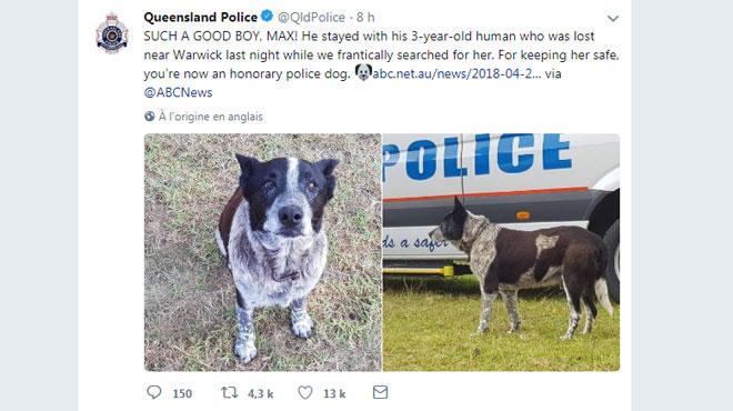 L'incroyable histoire de Max, un chien héroïque (vidéo) — Australie