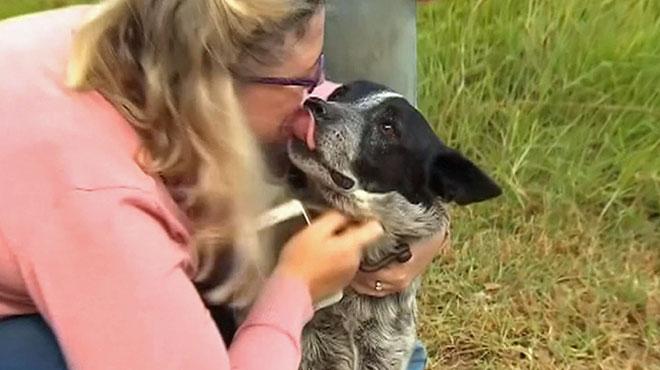 Voici l'histoire de Max, le chien sourd et malvoyant qui a protégé sa petite maîtresse de 3 ans perdue toute une nuit en pleine nature
