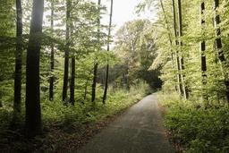Bruxelles, 27e ville la plus verte selon TravelBird