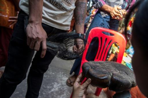 Le braconnage des éléphants s'intensifie en Birmanie, prévient une ONG