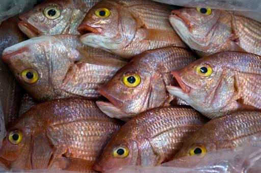 Le poisson surfe sur les tendances du snack sain