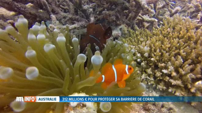 La Grande barrière de corail en danger: face à l'hécatombe, l'Australie investit 300 millions d'euros