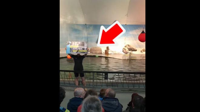 Trois défenseurs de la cause animale perturbent un spectacle d'otaries au zoo d'Anvers: l'un d'entre eux TOMBE dans le bassin (vidéo)