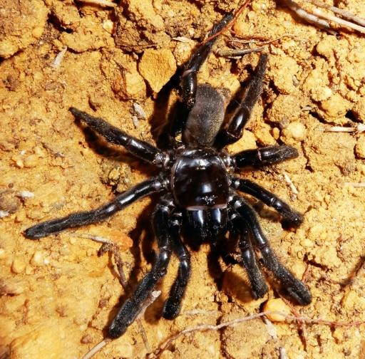 Australie: la doyenne présumée des araignées tuée par une guêpe