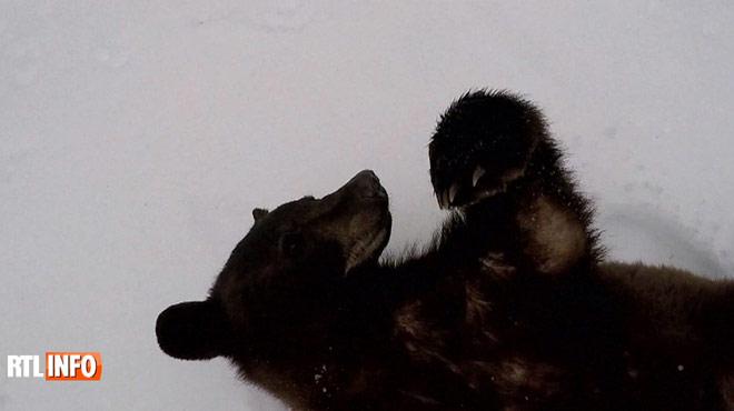 Ben a élevé plus de 150 oursons, avant de les relâcher dans la nature: