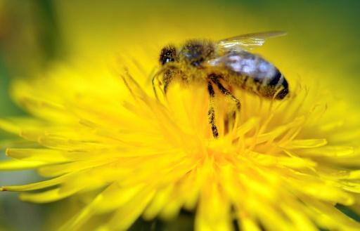 Des apiculteurs bretons entament un