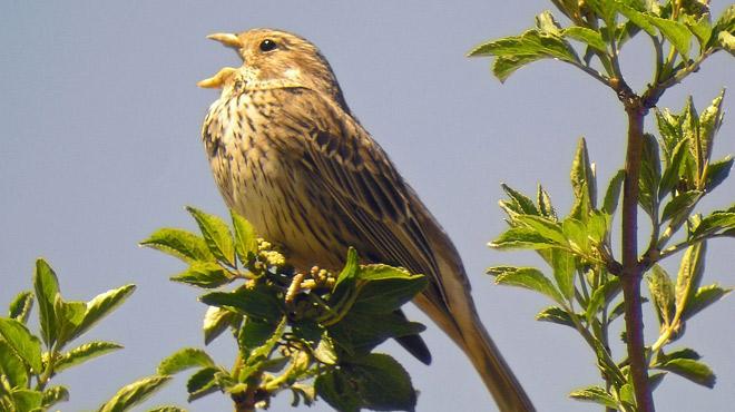 TRISTE: il y a de moins en moins d'oiseaux en Wallonie