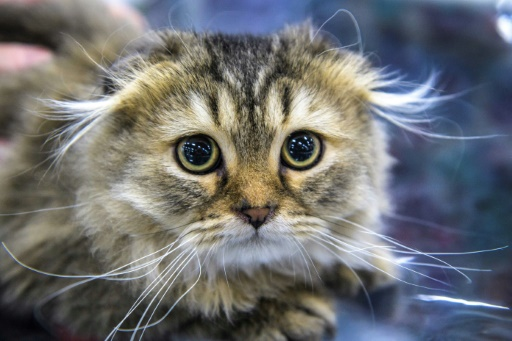Abandon, prolifération, souffrance...la SPA lance une campagne de sensibilisation à la stérilisation des chats