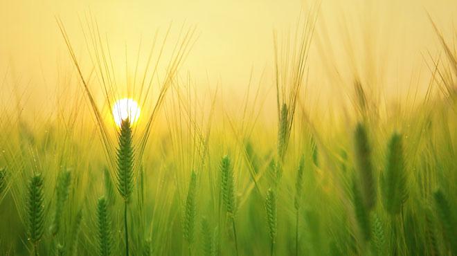 Prévisions météo: retour timide du soleil