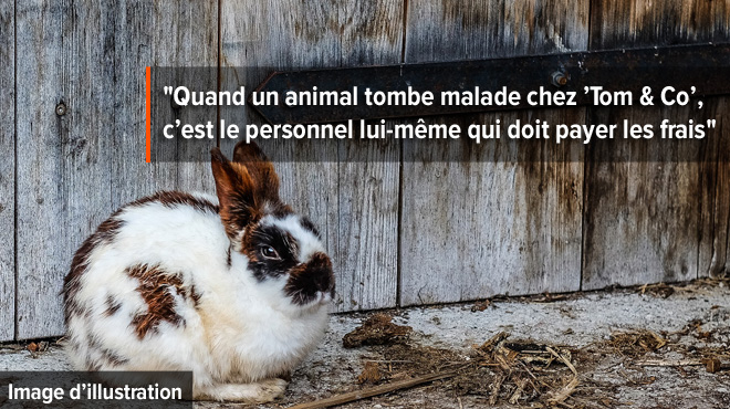 Tom & Co accusé de maltraitance animale par un parti politique: