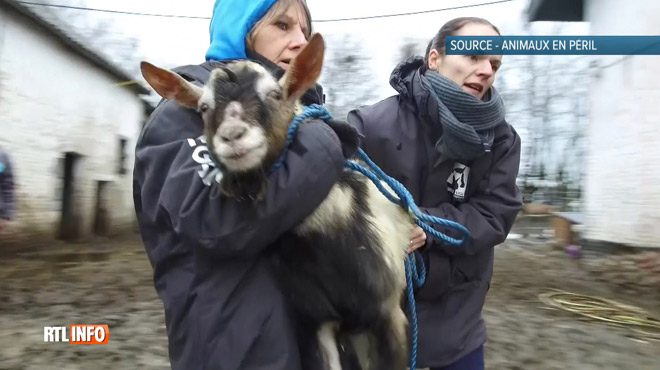 Des animaux menacés d'être retirés des refuges qui les ont sauvés: le ministre fait volte-face et assure qu'ils ne seront pas déplacés