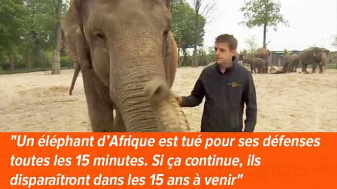 Pour lutter contre le trafic d'ivoire et sauver les éléphants, voici comment vous pouvez agir