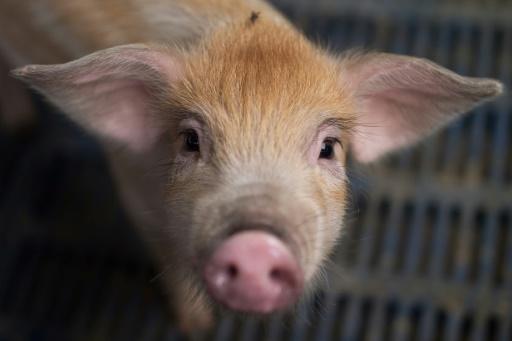 Porc, auto: des produits américains dans le viseur de la Chine