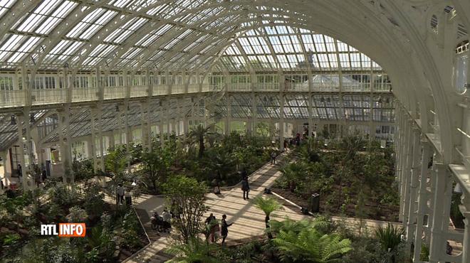 La plus grande serre victorienne rouvre ses portes à Londres: découvrez des plantes que vous ne verrez nulle part ailleurs
