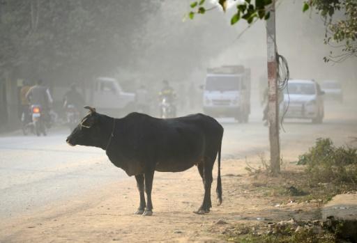 Inde: un musulman soupçonné d'avoir tué une vache battu à mort