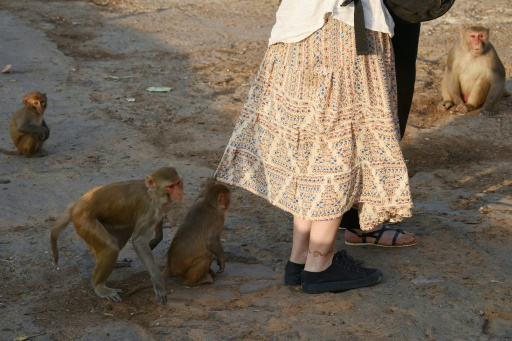 Inde: deux touristes français attaqués par des singes au Taj Mahal