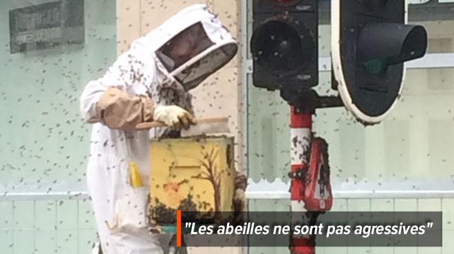 Un essaim d'abeilles se forme en plein centre de Bruxelles :