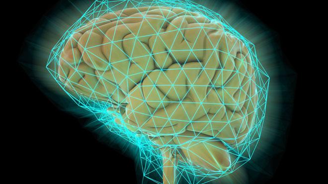 Des chercheurs pensent savoir pourquoi le cerveau humain n'a cessé de grossir au cours de l'Histoire